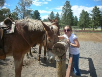 Sarah petting mule